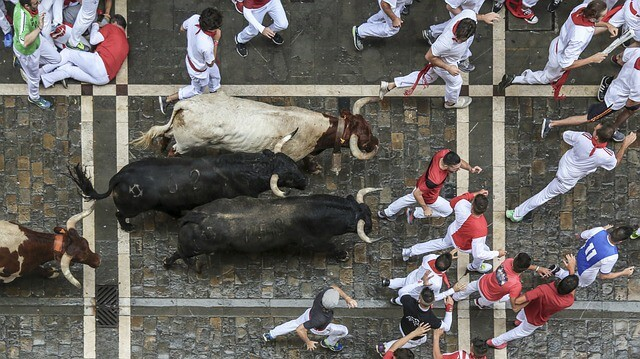 Top down shot of the Running of the bulls festival featuring two black horned bulls, and one white horned bull chasing multiple men dressed in white with red belts