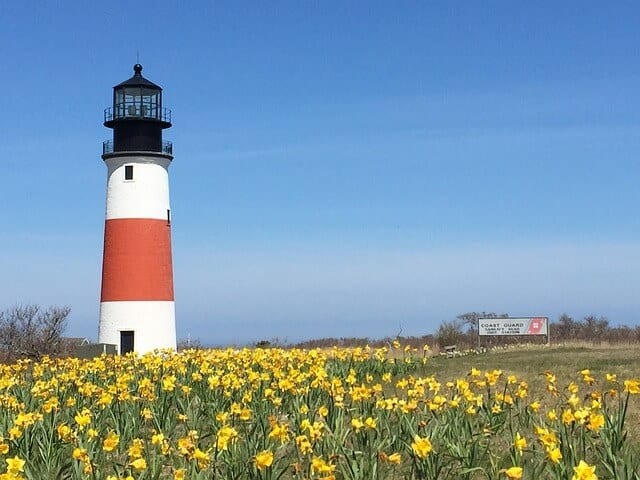 White Nantucket Lighthouse with a red band around the centre and surrounded by a field of Daffodils