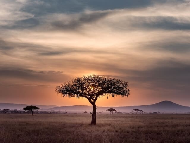 Sunset behind a silohuette of a single acacia tree
