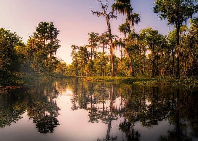 Peaceful swamp scene at dusk with tall trees in the background and still water in the foreground reflecting the trees