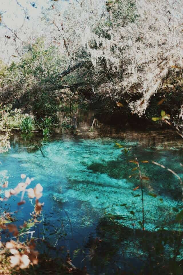 Clear blue water surrounded by light green trees hanging down at Ichetucknee Springs Florida