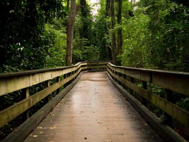 Wooden walkway through the forrest with large tall green leafed trees rising up either side of the walkway