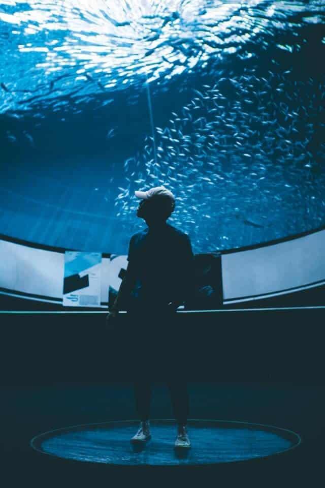 Man standing underneath the aquarium tank at the Miami Science Museum