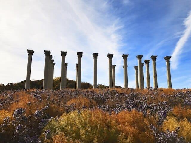 Capitol Columns at the US National Arboretum