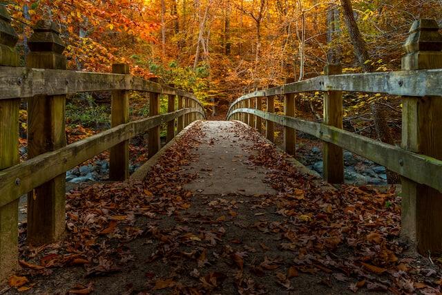Wooden Bridge surrounded by autumn leaves in Rock Creek Park, Washington DC